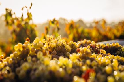see sights of Australia vineyard tour